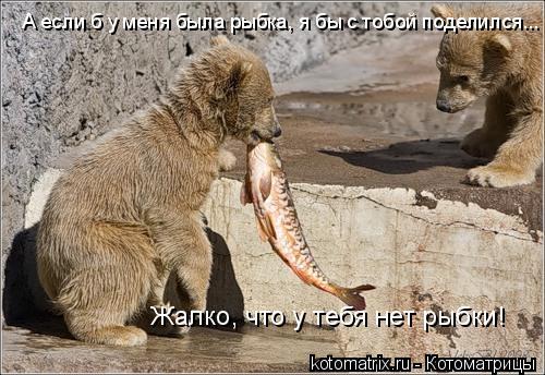 Котоматрица: А если б у меня была рыбка, я бы с тобой поделился... Жалко, что у тебя нет рыбки!
