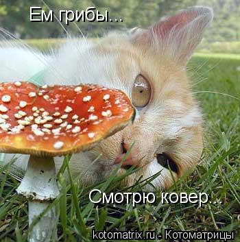 Котоматрица: Ем грибы... Смотрю ковер...