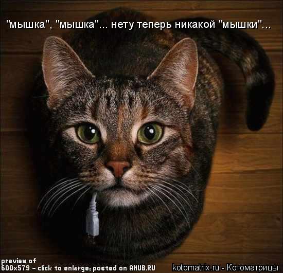 "Котоматрица: ""мышка"", ""мышка""... нету теперь никакой ""мышки""..."