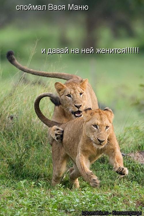 Котоматрица: споймал Вася Маню и давай на ней женится!!!!!!