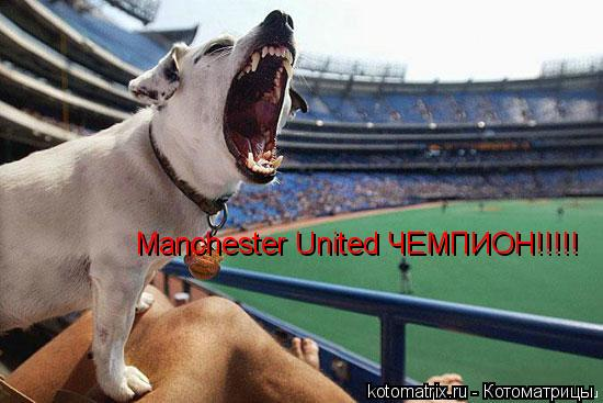 Котоматрица: Manchester United ЧЕМПИОН!!!!!