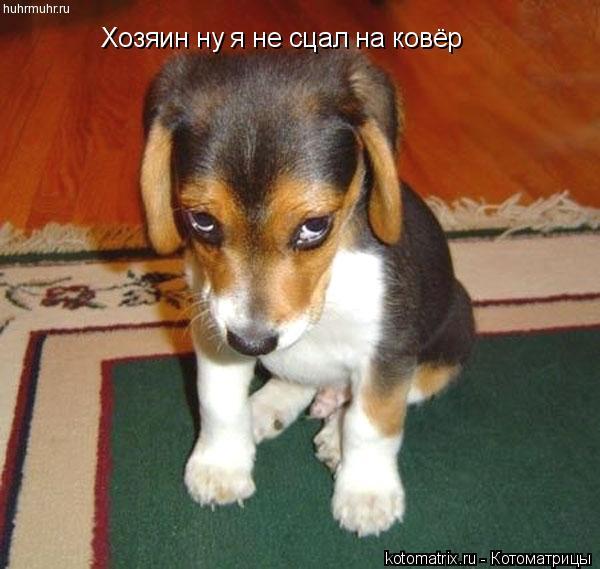 Котоматрица: Хозяин ну я не сцал на ковёр