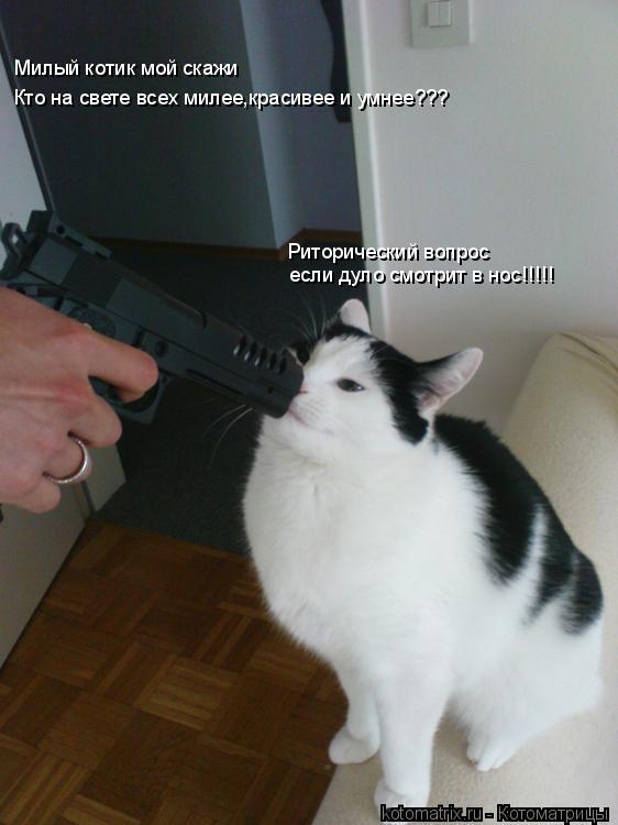 Котоматрица: Милый котик мой скажи Кто на свете всех милее,красивее и умнее??? Риторический вопрос  если дуло смотрит в нос!!!!!