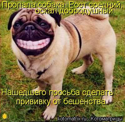 Котоматрица: Пропала собака. Рост средний,   оскал добродушный.  Нашедшего просьба сделать  прививку от бешенства.