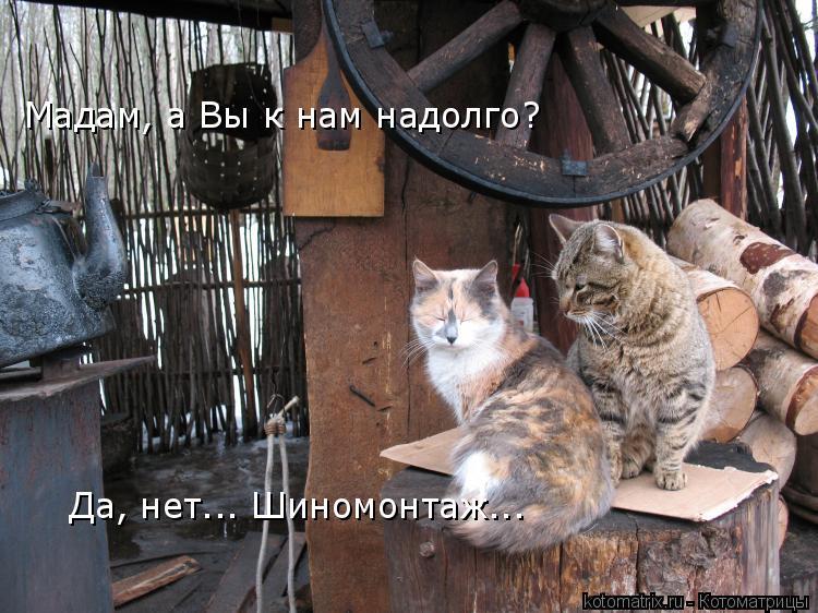 Котоматрица: Мадам, а Вы к нам надолго? Да, нет... Шиномонтаж...