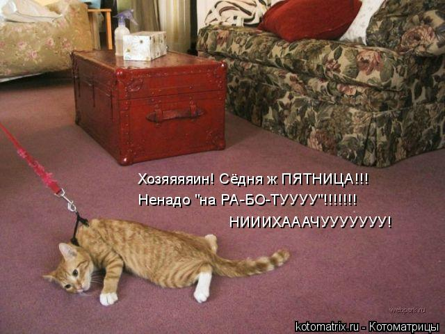 "Котоматрица: Хозяяяяин! Сёдня ж ПЯТНИЦА!!! Ненадо ""на РА-БО-ТУУУУ""!!!!!!! НИИИХАААЧУУУУУУУ!"