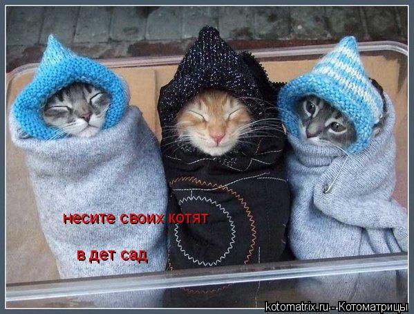 Котоматрица: несите своих котят  в дет сад