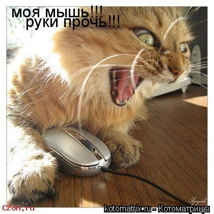 Котоматрица: моя мышь!!! руки прочь!!!
