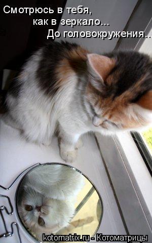 Котоматрица: Смотрюсь в тебя, как в зеркало... До головокружения...