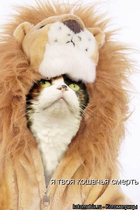 Котоматрица: я твоя кошачья смерть