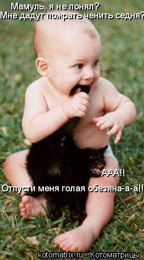 Котоматрица: Мамуль, я не понял?  Мне дадут пожрать ченить седня??! ААА!! Отпусти меня голая обезяна-а-а!!