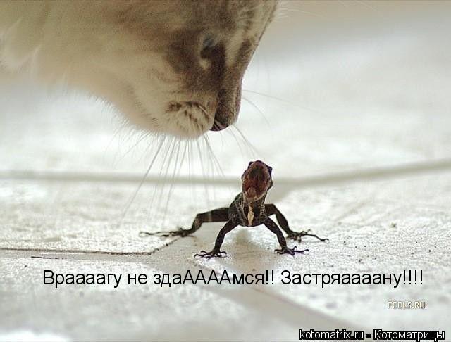 Котоматрица: Враааагу не здаААААмся!! Застряаааану!!!!