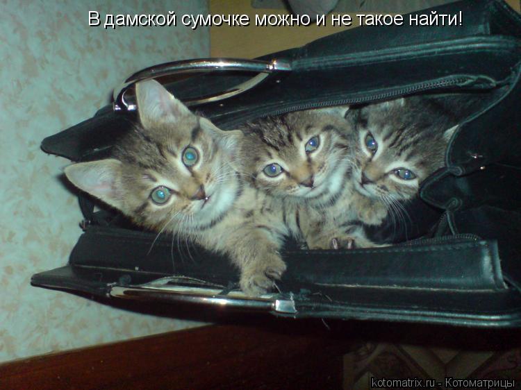Котоматрица: В дамской сумочке можно и не такое найти!