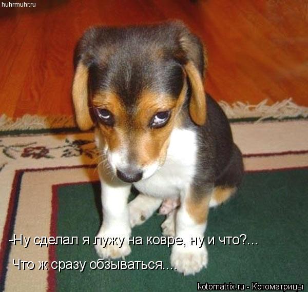 Котоматрица: -Ну сделал я лужу на ковре, ну и что?... Что ж сразу обзываться....