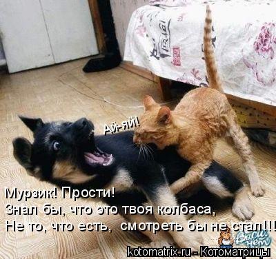Котоматрица: Ай-яй! Мурзик! Прости! Знал бы, что это твоя колбаса, Не то, что есть,  смотреть бы не стал!!!