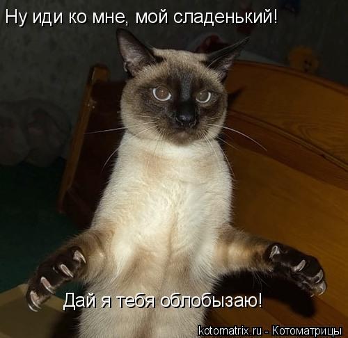 Котоматрица: Ну иди ко мне, мой сладенький! Дай я тебя облобызаю!
