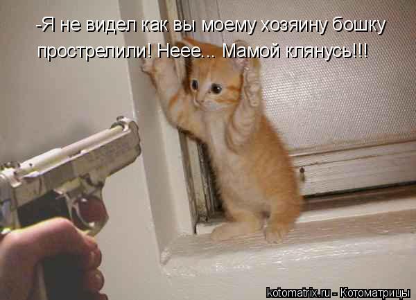 Котоматрица: -Я не видел как вы моему хозяину бошку прострелили! Неее... Мамой клянусь!!!