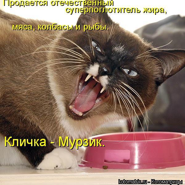 Котоматрица: Продается отечественный  суперпоглотитель жира, мяса, колбасы и рыбы. Кличка - Мурзик.