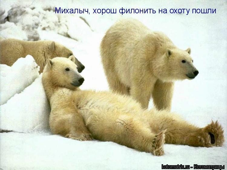 Котоматрица: Михалыч, хорош филонить на охоту пошли