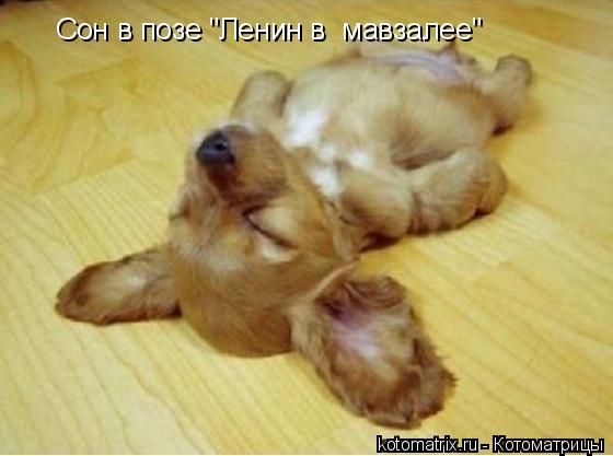 """Котоматрица: Сон в позе """"Ленин в  мавзалее"""""""