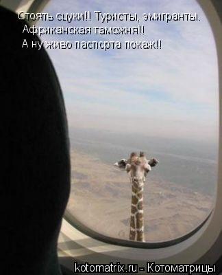 Котоматрица: Стоять сцуки!! Туристы, эмигранты. Африканская таможня!! А ну живо паспорта покаж!!