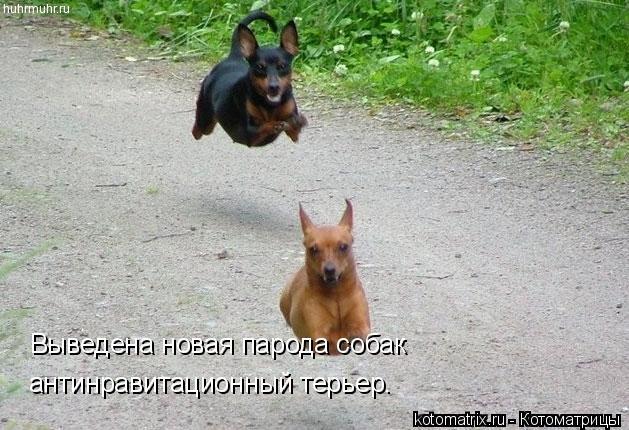 Котоматрица: Выведена новая парода собак антинравитационный терьер.