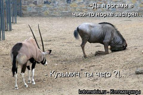 Котоматрица: - Кузьмич, ты чего ?!.... -Да я рогами в  чьей-то норке застрял...