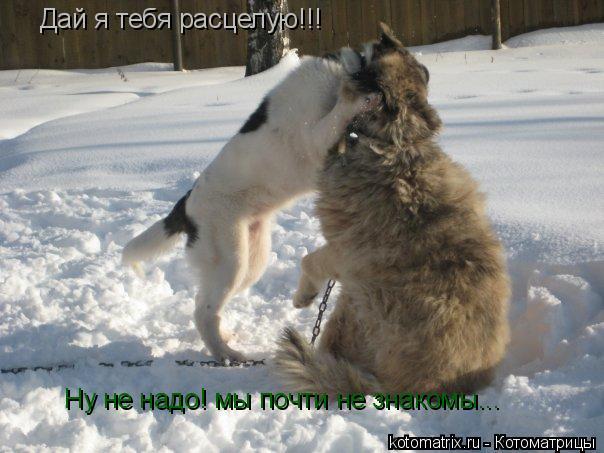 - elenka8794