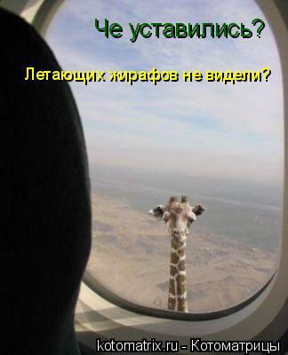 Котоматрица: Че уставились?  Летающих жирафов не видели?