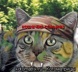 Котоматрица: кошачий спецназ