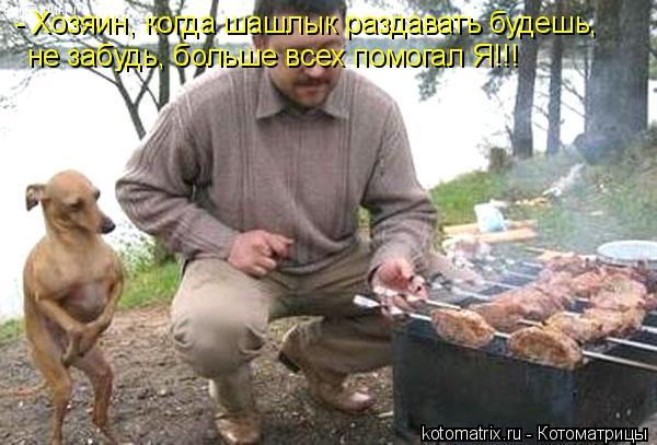 Котоматрица: - Хозяин, когда шашлык раздавать будешь, не забудь, больше всех помогал Я!!!