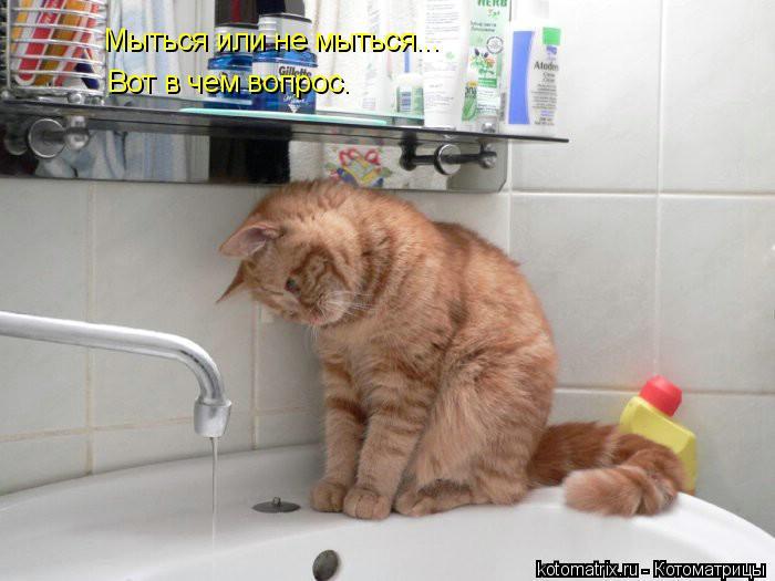 Котоматрица: Мыться или не мыться... Вот в чем вопрос.