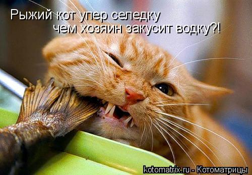 Котоматрица: Рыжий кот упер селедку чем хозяин закусит водку?!