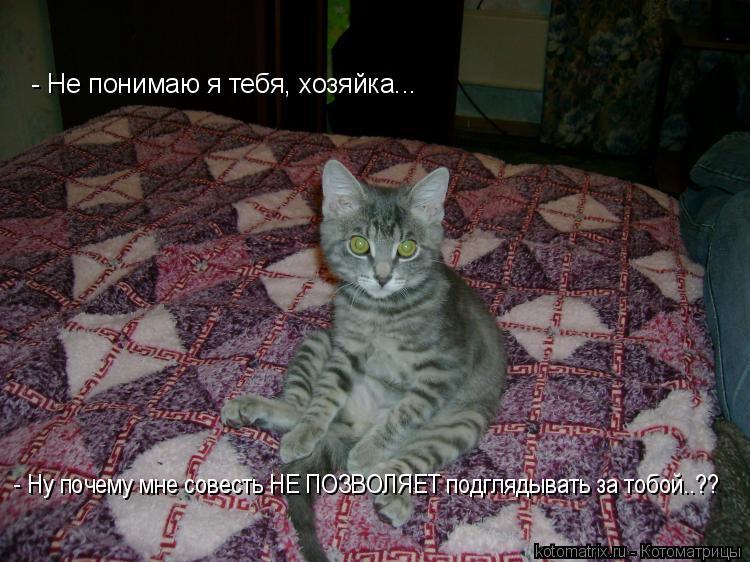 Котоматрица: - Не понимаю я тебя, хозяйка... - Ну почему мне совесть НЕ ПОЗВОЛЯЕТ подглядывать за тобой..??