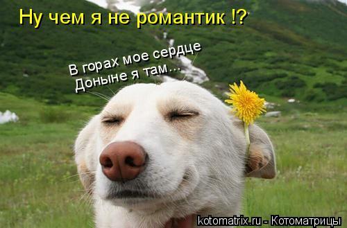 Котоматрица: Ну чем я не романтик !? В горах мое сердце Доныне я там...