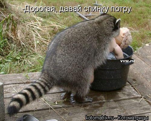 Котоматрица: -Дорогая, давай спинку потру.
