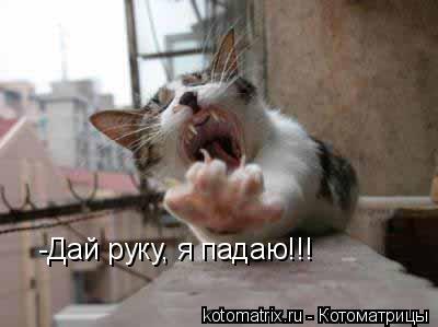 Котоматрица: -Дай руку, я падаю!!!