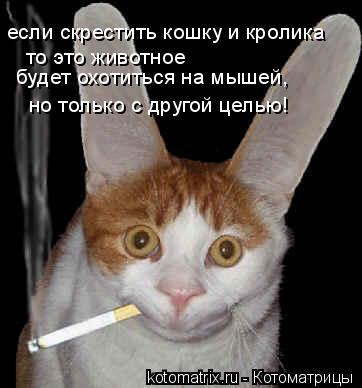 Котоматрица: если скрестить кошку и кролика то это животное  будет охотиться на мышей, но только с другой целью!