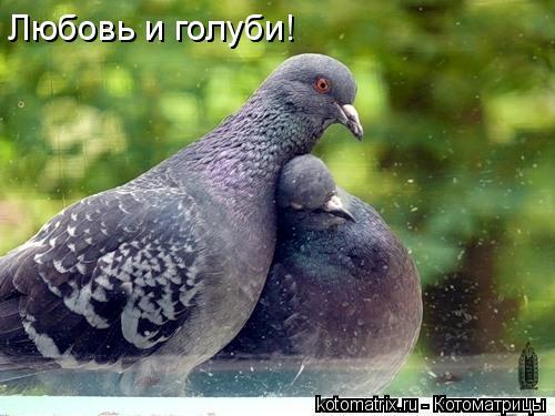 Котоматрица: Любовь и голуби!