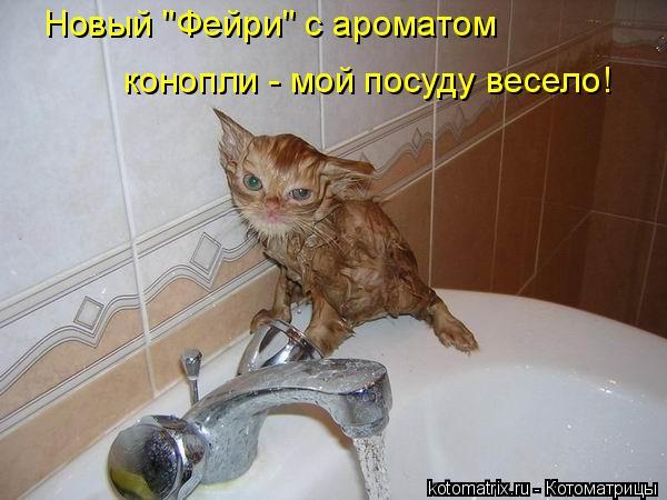 """Котоматрица: конопли - мой посуду весело! Новый """"Фейри"""" с ароматом"""