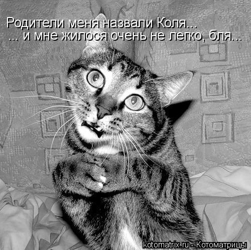 Котоматрица: Родители меня назвали Коля... ... и мне жилося очень не легко, бля...