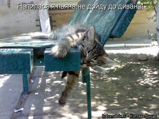 Котоматрица: Напилася я пьяна,не дойду до дивана!
