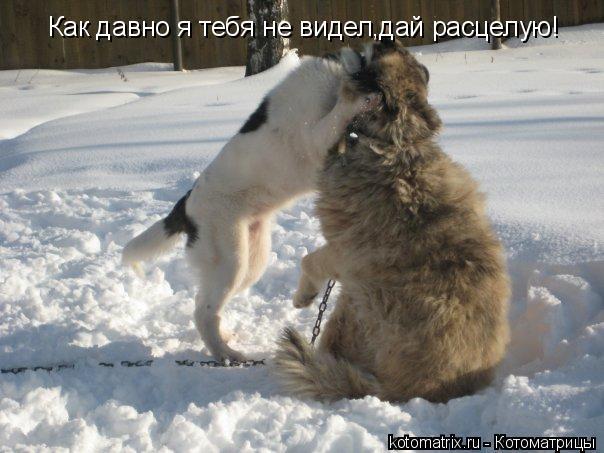 Котоматрица: Как давно я тебя не видел,дай расцелую!