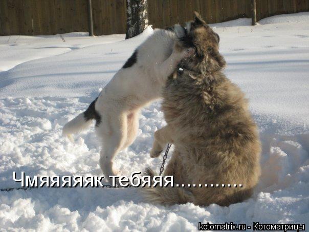 Котоматрица: Чмяяяяяк тебяяя............