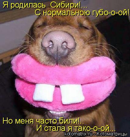 Котоматрица: Я родилась  Сибири!...  С нормальною губо-о-ой!... Но меня часто били!.. И стала я тако-о-ой...