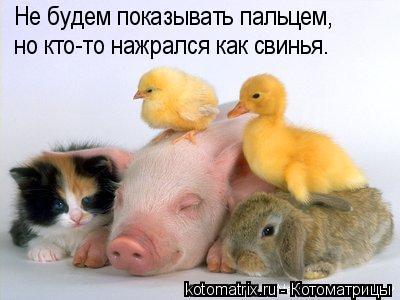 Котоматрица: Не будем показывать пальцем, но кто-то нажрался как свинья.