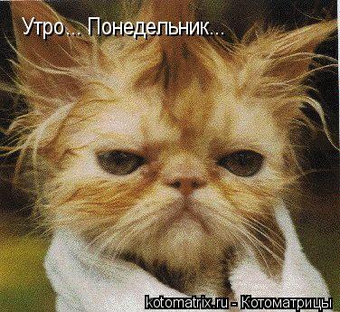 Котоматрица: Утро... Понедельник...