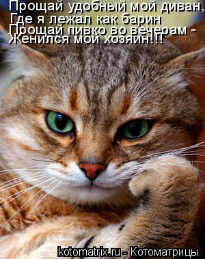 Котоматрица: Прощай удобный мой диван, Где я лежал как барин Прощай пивко во вечерам - Женился мой хозяин!!!