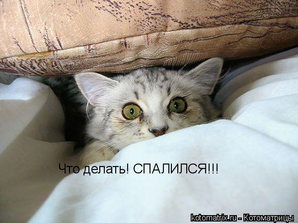 Котоматрица: Что делать! СПАЛИЛСЯ!!!