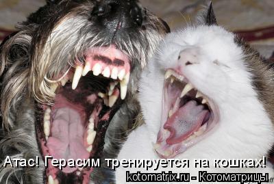 Котоматрица: Атас! Герасим тренируется на кошках!